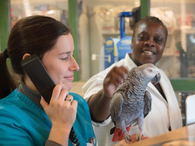 acccueil asv clinique veterinaire  andresy - 9